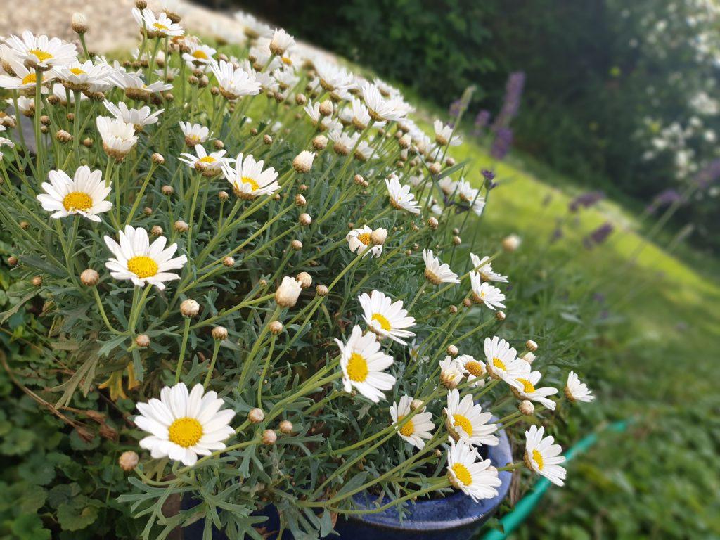 Den Garten genießen - mit Blick auf Blüten, Insekten und frische Früchte.