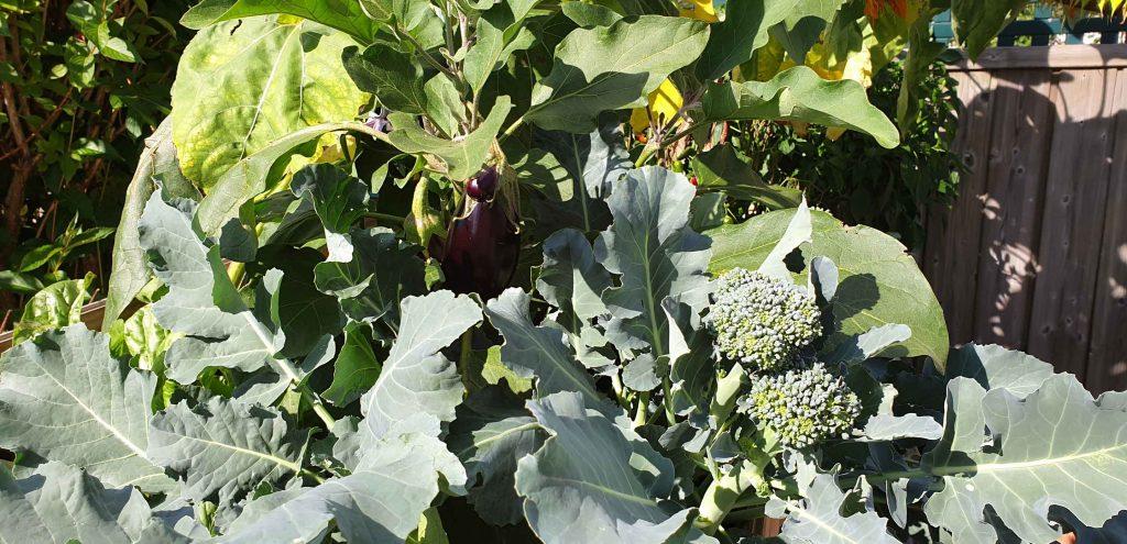 Gartenplanung für den Gemüsegarten
