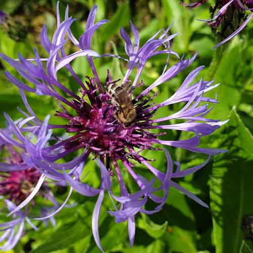 Nützlinge im Garten: Insekten freuen sich über ein buntes Blütenmeer