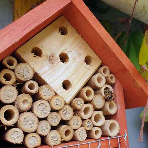 Nützlinge im Garten: Bienchen beim Einzug