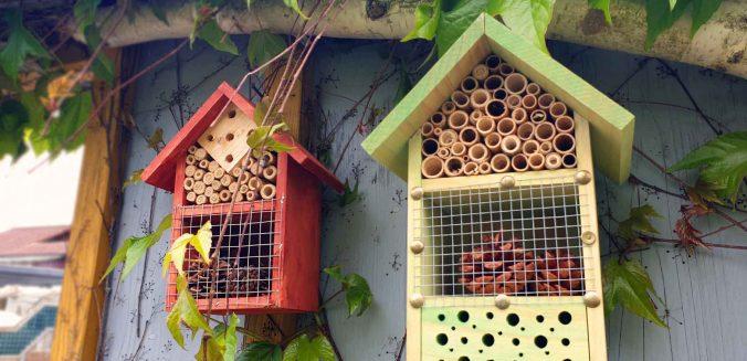 Nützlinge im Garten oder der Kreislauf vor deiner Haustüre