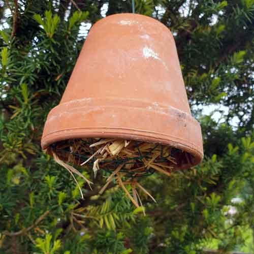 Nützlinge im Garten: Ohrwürmer lieben Stroh
