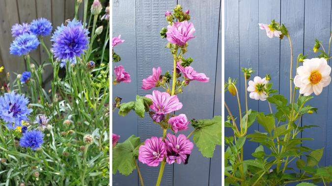 Gartenglück: Blühende Träume genießen