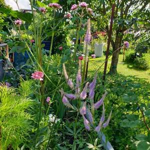 Ein Ziergarten besticht durch bunte Blüten das ganze Jahr hindurch.